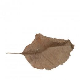 Fallen Leaves #12