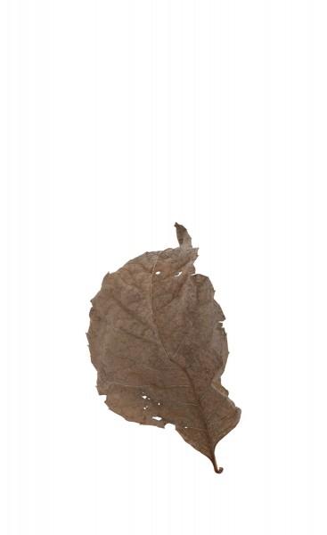 Fallen Leaves #15