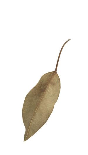 Fallen Leaves #4