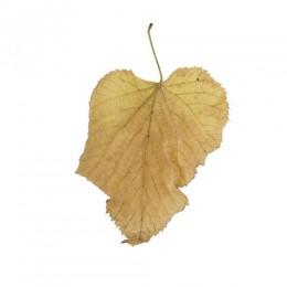 Fallen Leaves #7