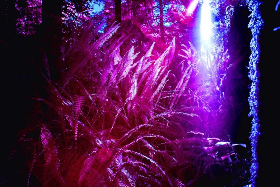 Ferns No. 1, Canada