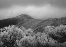 Frost & Snowgums, Mt. Hotham, Victoria, Australia