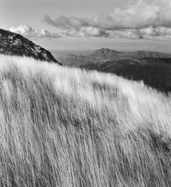Grass & Mt. Cobbler, Viictoria, Australia