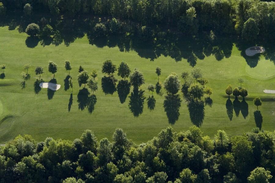 Three Tree Lines, near Sodus, NY