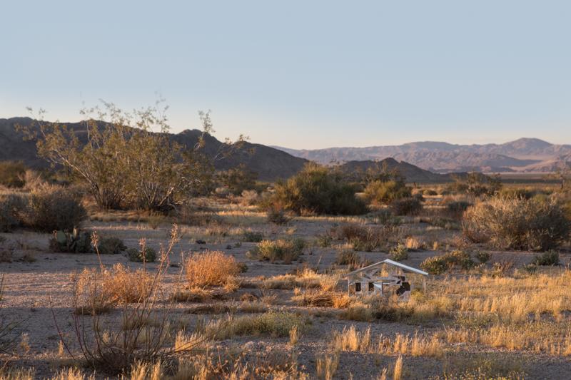 June 4, Yucca Valley