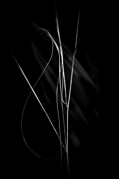 The Edge of Simplicity V