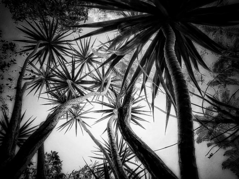 In the Garden at Chislehurst #6769