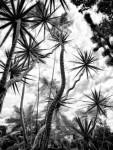 In the Garden at Chiselhurst #9053