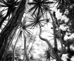In the Garden at Chiselhurst #9089