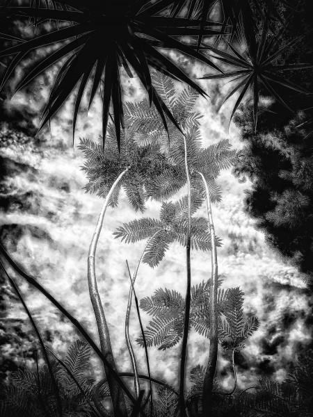 In The Garden at Chiselhurst #8252