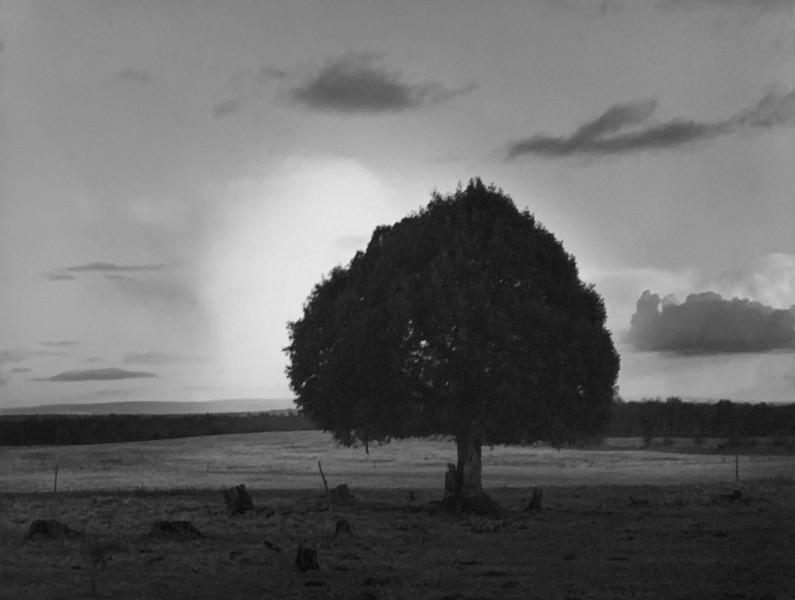 Cloud & Tree, Clonfert Co, Galway, Ireland