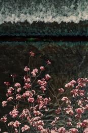 Sakura and Stream, Kyoto