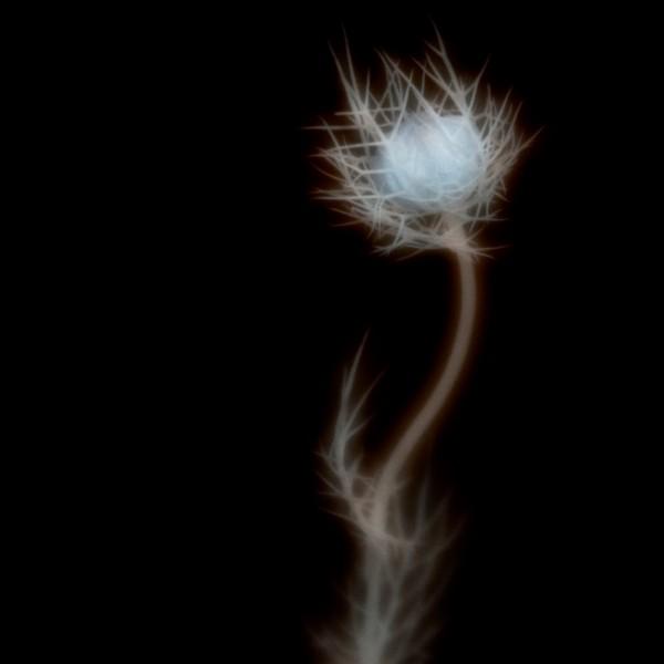 Secret Light 12