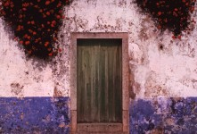 Wall With Roses, Obidos, Portugal