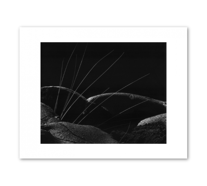 Reeds and Lava: Brett Weston