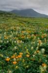 Montana de Oro Fog & Wildflowers