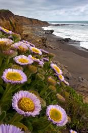 San Simeon Wildflowers