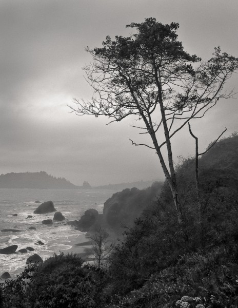 Misty Morning, Trinidad Coast