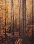 Glowing Appalachian Forest. VA