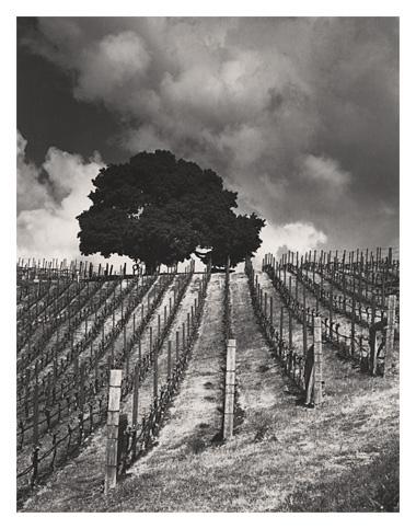 Lindstrom Vineyard
