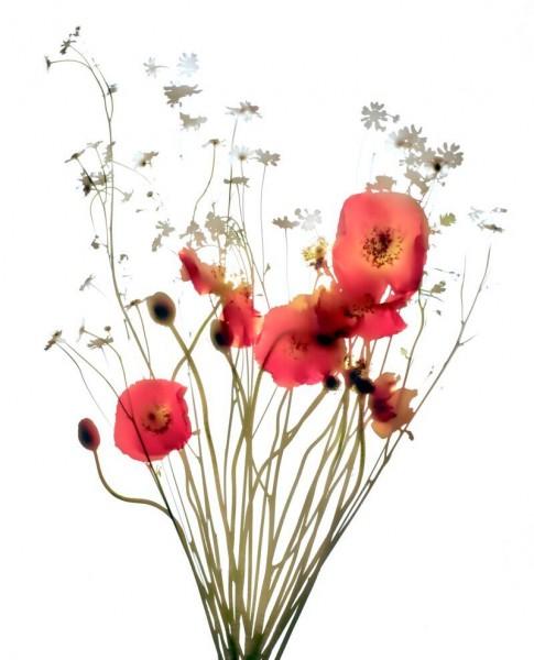 Icelandic Bouquet