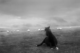 Pantomine Horse