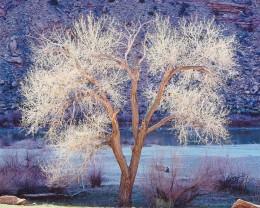 Sunlight, Cottonwood and Colorado River, Utah