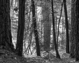 Mirror Lake Reflection, Yosemite National Park