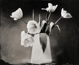 Tulips in Jug