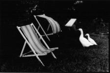 Les Oies de Ty Cam: Philippe Salaün
