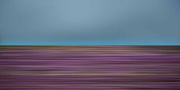 Wildflowers49
