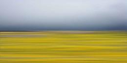 Wildflowers51