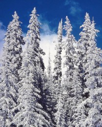 White Snow Spires, Colorado